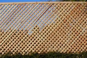 Larch diamond trellis 600 x 1.83